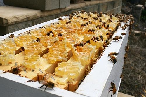 super productive bees - Mahakobees